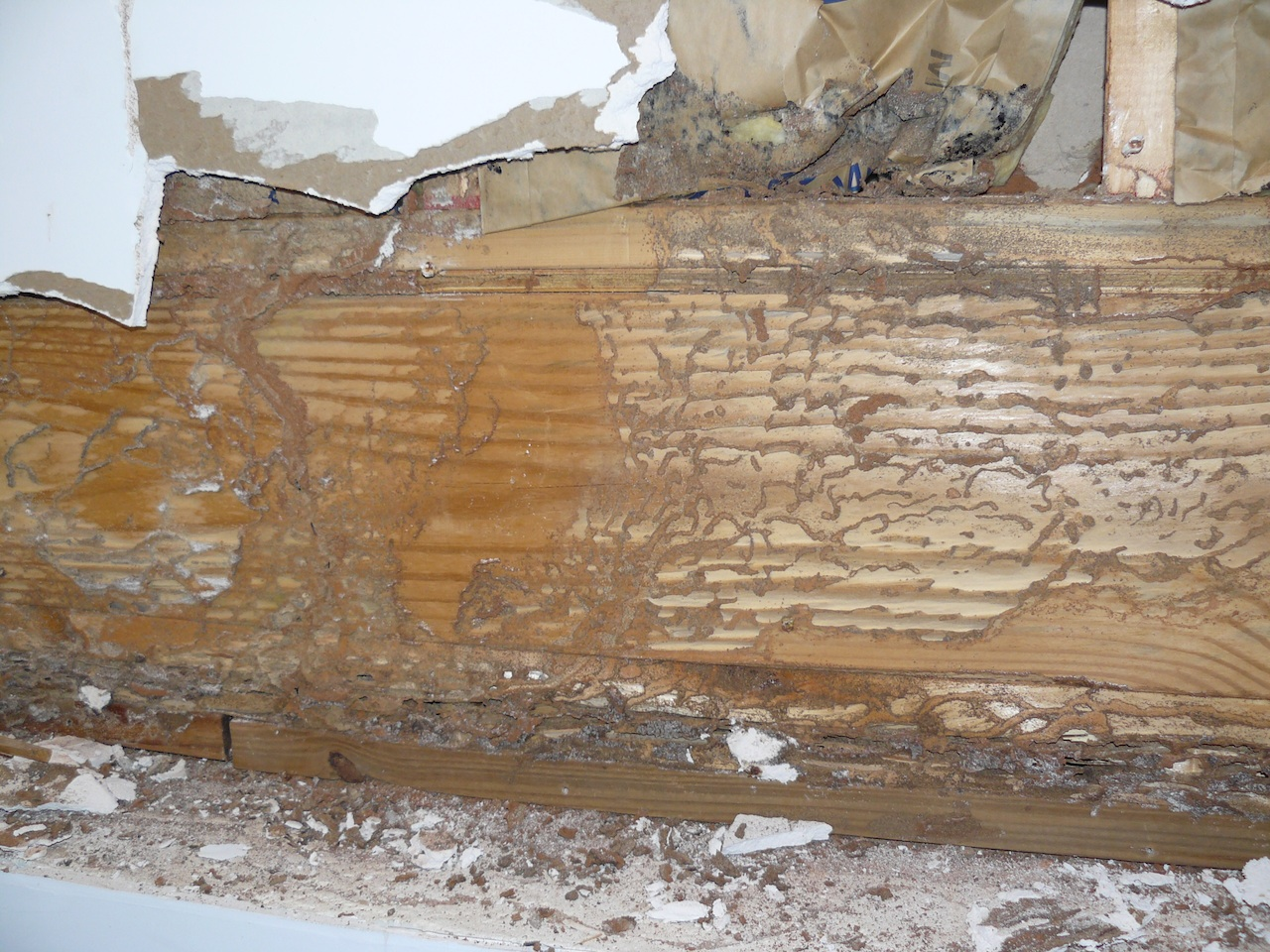 Termites Tubes On Sheetrock And Wall Studs